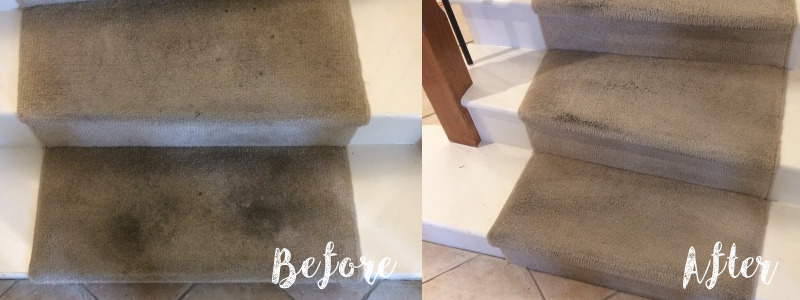 Sydney Carpet Cleaning Before and After